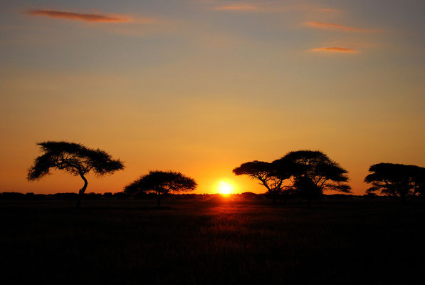 Central Kalahari,Botswana
