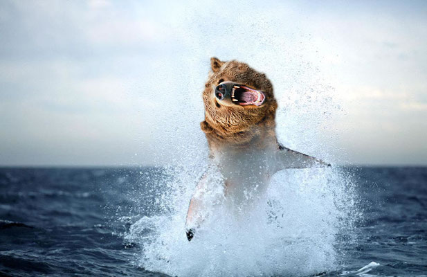 """Shark-Bear"" - DominikH"