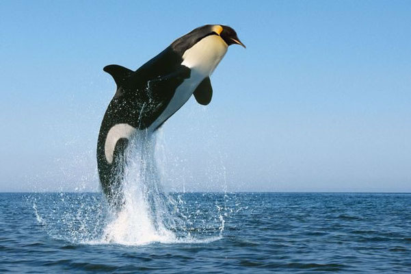 """Whale-Penguin"" - KellyC"