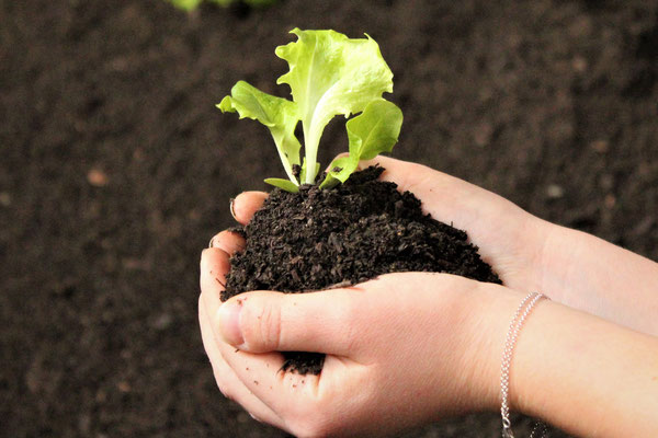 Gemüseerde, Kompost, Erde, Mutterboden, Humus, Boden