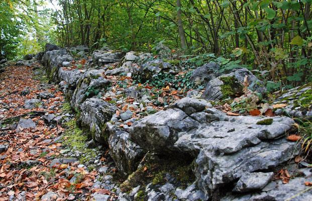 Gut erhaltene Trockenmauer auf der Ostseite der Bürglen, zum Teil mit Stauden und Moos überwuchert