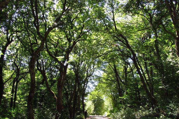 Der fallende Baum macht Krach, der Wald wächst lautlos. ~ Tibetisches Sprichwort