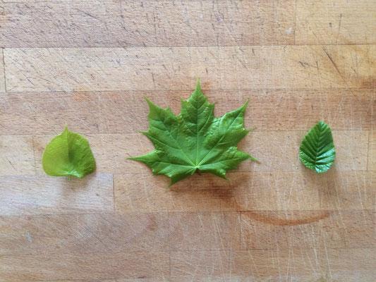 Blätter von Linde, Ahorn und Buche