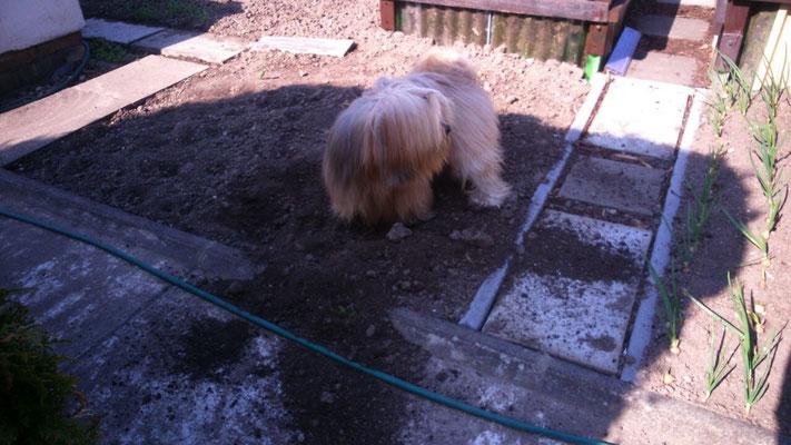 ... Gartenarbeit muß sein.