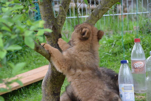 Katze müßte man sein, dann käme ich höher auf den Baum 'rauf