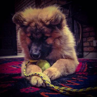 Balou (Bruno)