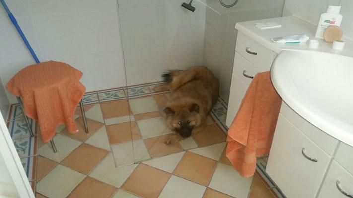 Balu (Bruno) wenn er seine Ruhe haben möchte