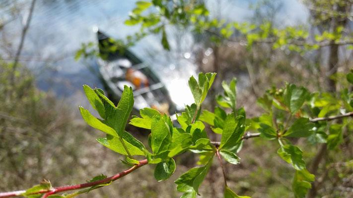 ...erstes zarten Frühlingsgrün