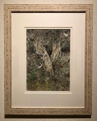 堀岡正子「樹」