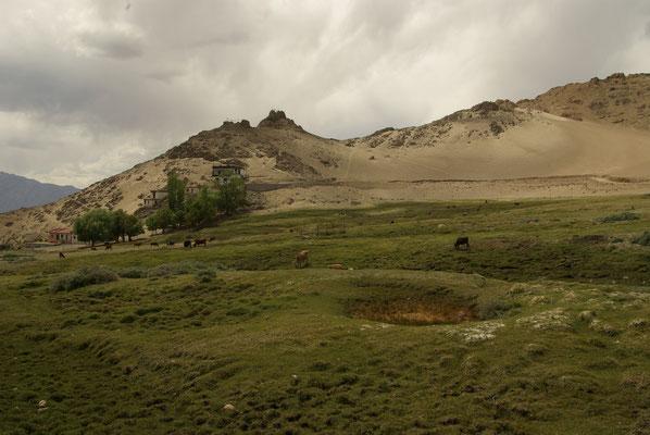 Leh - Sabu, eine grüne Insel mit Kühen