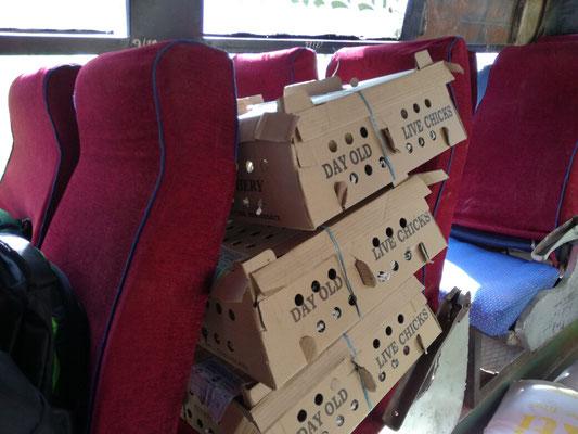 auch 3 Kartons mit Eintagskueken, ein 250 l Wassertank und etliche volle Saecke fahren mit