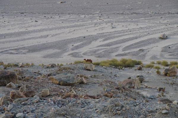...und wo sich Kamele herumtreiben muss es ja warm sein.