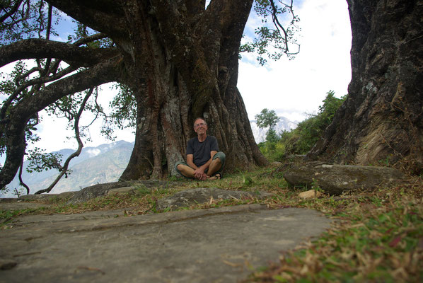 Mein Lieblingsplatz nach derSchule, ein riesiger Bodhi Baum (auch Baum der Erleuchtung genannt - vielleicht hilft es ja)