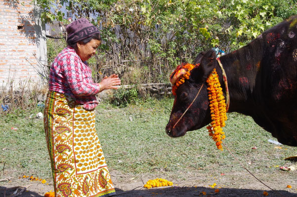 Familienmitglieder ehren ihre Kuh