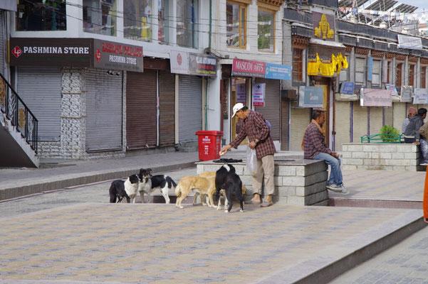 Ein Mann fuettert freilaufende Hunde