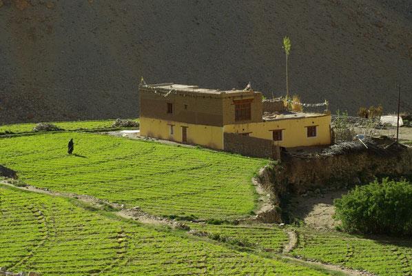 Saspochey: Am Morgen werden die Felder bewässert