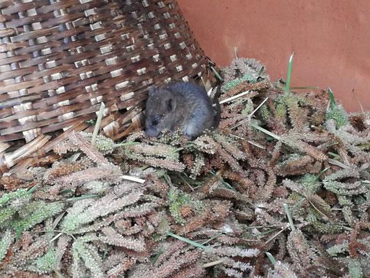 Viel Futter fuer eine kleine Maus