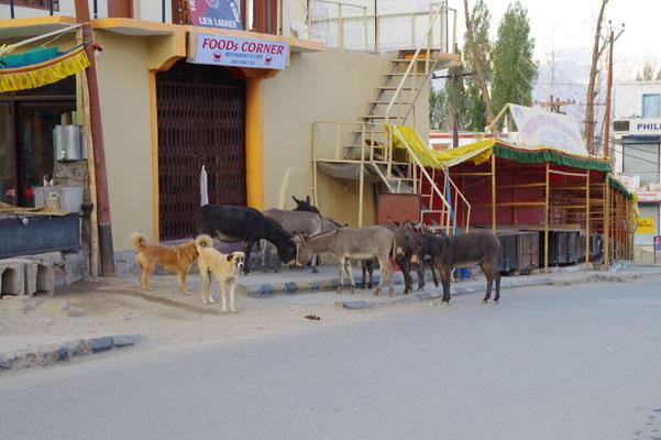 """Esel und Hunde warten vor dem """"Foods Corner"""""""