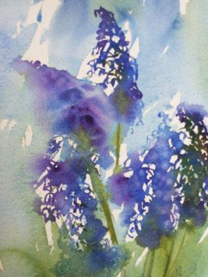 Jacinthes / Hyacinths