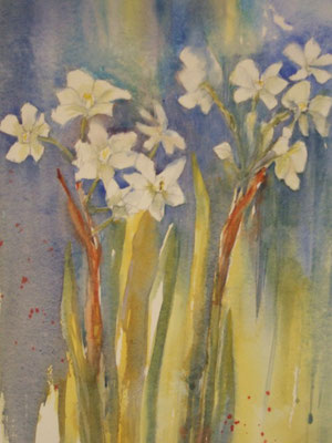 Jonquils / Narcissi