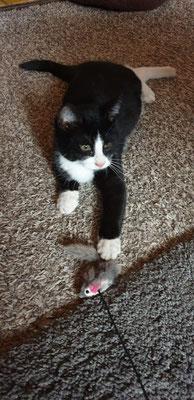 Felix sendet liebe Grüße aus seinem neuen Heim.
