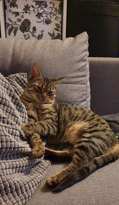 Leo beim Schönheitsschlaf
