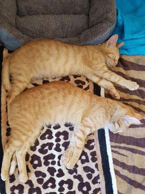 Dante & Danilo im neuen Zuhause