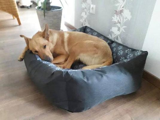 Maja genießt ihren Mittagschlaf und hat sich super eingelebt.