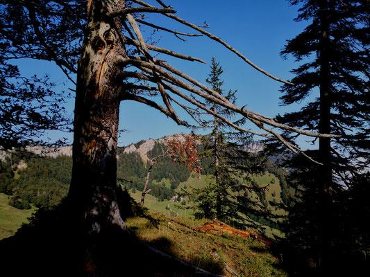 Fotos Bäume Jura