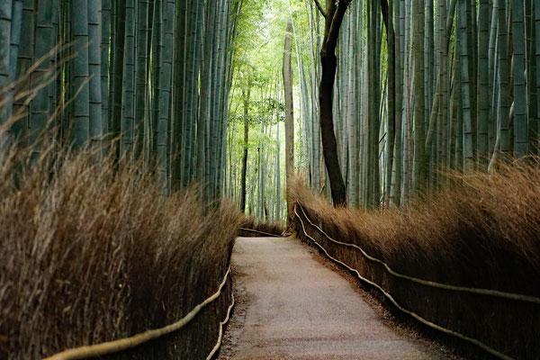 Arashiyama Bamboo Forest Sonnenaufgang