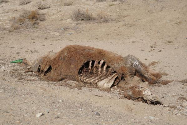 ..assen zuvor genüsslich am totend Tier