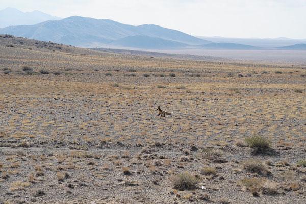 Ein Fuchs rennt davon...