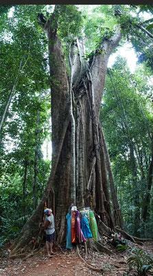 Mekka Tree