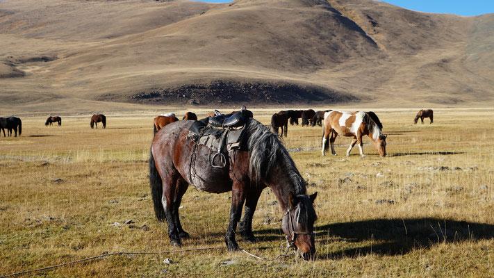 Die Pferde der Familie