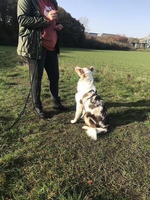 Wildlinge Hundetraining Welpenkurs Cookie 10-Leckerchen-Spiel