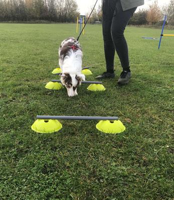 Wildlinge Hundetraining Welpenkurs Cookie Parcours