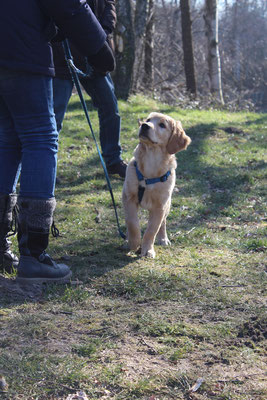 Wildlinge Hundetraining Welpe Henry 10-Leckerchen-Spiel