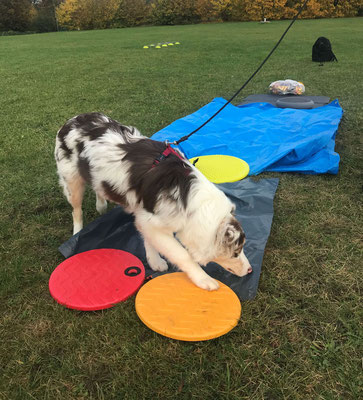 Wildlinge Hundetraining Welpenkurs Cookie Taststraße