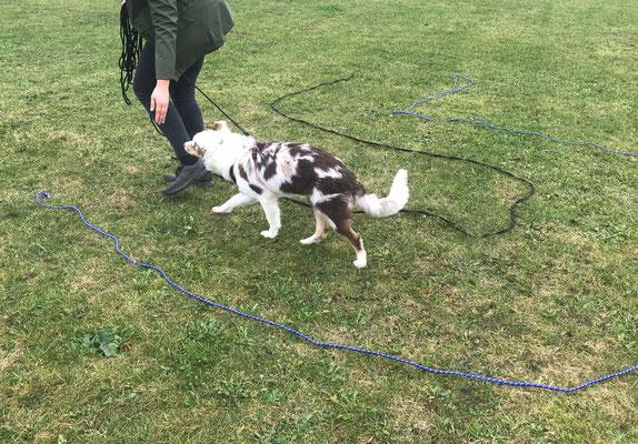 Wildlinge Hundetraining Welpenkurs Cookie Labyrinth