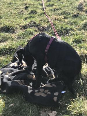 Wildlinge Hundetraining Welpenkurs Maila Ruhedecke