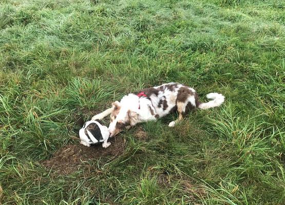 Wildlinge Hundetraining Welpen Cookie und Frida spielen im Buddelloch