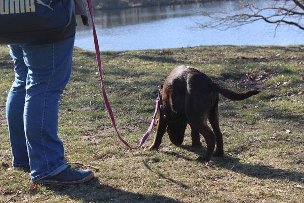 Wildlinge Hundetraining Welpe Lilly Futtersuche