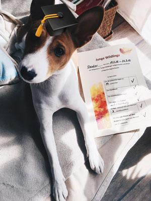 Wildlinge Hundetraining Welpe Dexter