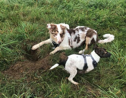 Wildlinge Hundetraining Welpen Cookie und Frida spielen