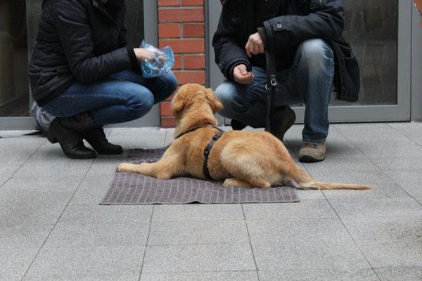 Wildlinge Hundetraining Welpe Henry Entspannungsdecke Stadttraining