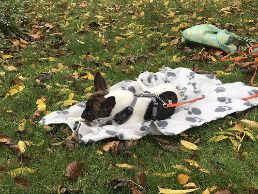 Wildlinge Hundetraining Welpenkurs Frida Ruhedecke Kauartikel