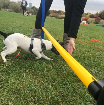 Wildlinge Hundetraining Welpenkurs Frida Limbo