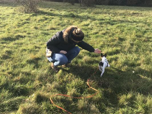 Wildlinge Hundetraining Welpenkurs Frida Handtouch