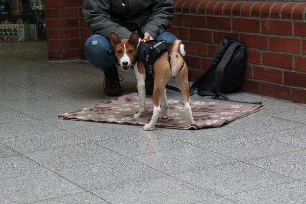 Wildlinge Hundetraining Welpe Dexter Entspannungsdecke Stadttraining