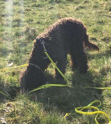 Wildlinge Hundetraining Welpenkurs Amo Leckerchensuche
